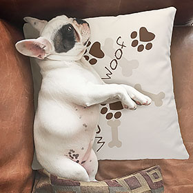 Cute English bulldog lying on a custom printed pillow with pw print illustrations and text that reads: Woof.