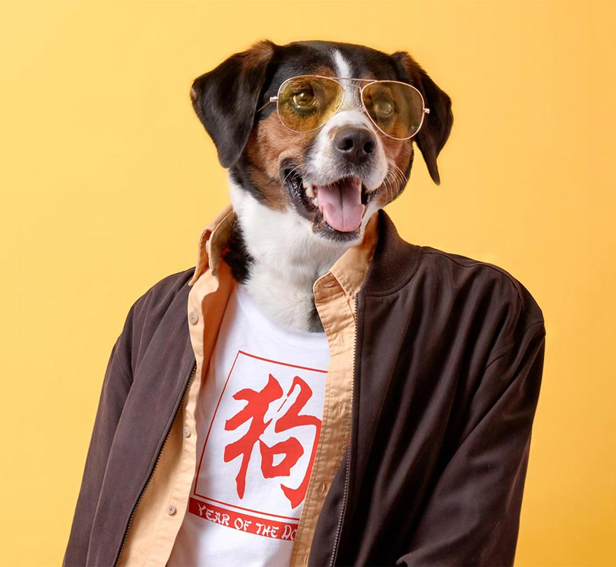 Hipster dog dressed like a human wearing a custom Cafepress 'Year of the Dog' shirt